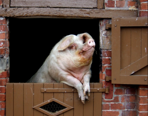 Living the good life: off-grid home tech… and pigs.