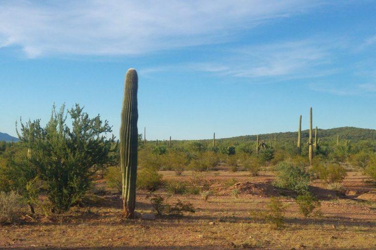 desert-1-1-point-5