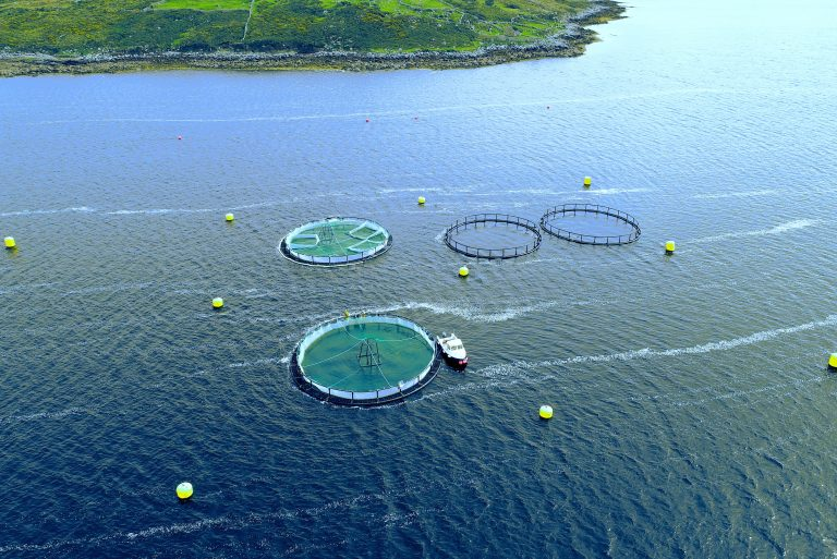 IMPAQT: Supporting the Sustainable Development of Aquaculture