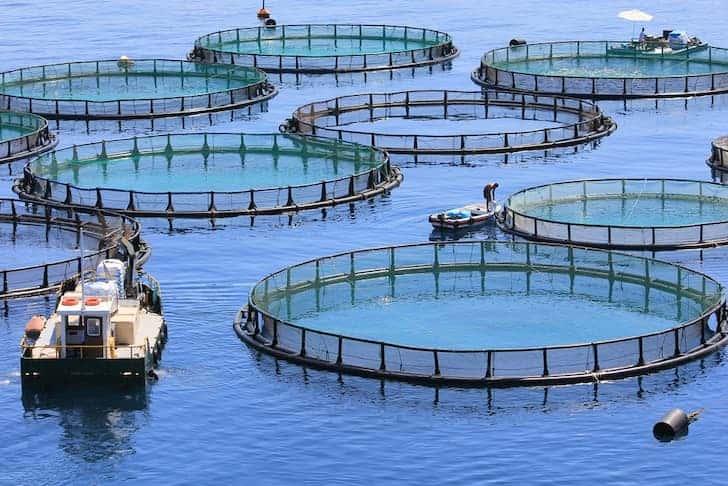 Is Aquaculture sustainable? – Australian Marine Conservation Society