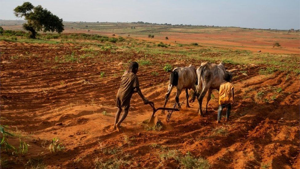 Madagascar on the brink of climate change-induced famine – BBC
